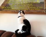 Může jít o obrázek cat a text that says 'Ahoj všichni, tak jsem tu zase... Moje dvounožka se ségrou skončily aukci pro Mléčny krok. Takže, ted' jsem na radé já... Mym kámošum a bráškim ze Slunička se zase určite budou hodit penízky z této aukce.'