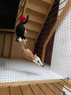 Může jít o obrázek cat a indoor