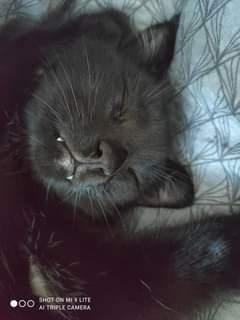 Může jít o obrázek cat a text that says 'SHOT ON MI 9LITE AI TRIPLE CAMERA'