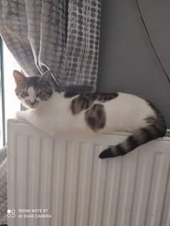 Může jít o obrázek kočka, uvnitř a text that says 'REDMI NOTE 8T AI QUAD CAMERA'