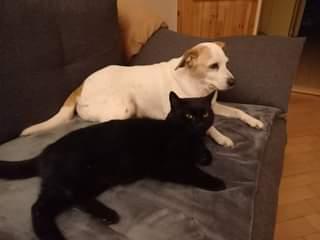 Může jít o obrázek pes, kočka a indoor