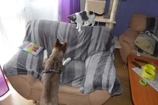 Může jít o obrázek dog , cat a indoor