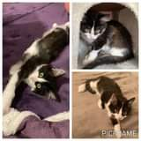 Může jít o obrázek cat a text that says 'PICFRAME'