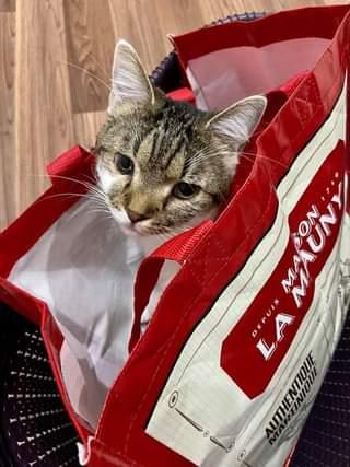 VENDULKA  Oblíbený pelíšek snad všech kočiček.. ...