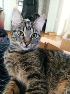 LESINKA   Kočička Lesinka ( v novém domově Jessi...