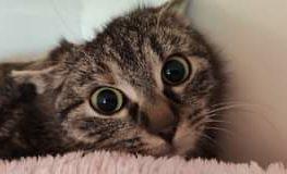 Může jít o detail kočka