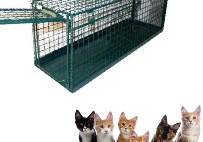 Na Kočičí přání vybíráme peníze na nákup nových ...