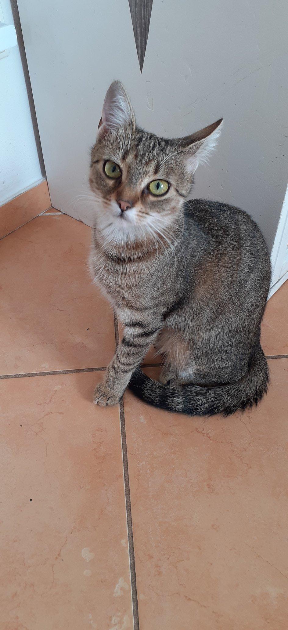STŘELKA  Kočička Střelka posílá krásné fotky do ...