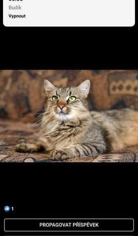 Může jít o obrázek cat a text that says '6:00 Hodiny 06:00 Budik Vypnout PROPAGOVAT PRISPEVEK lose osemilbi ibi Komentár Sdilet'