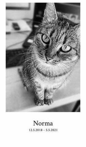Může jít o detail cat a text that says 'Norma 12.5.2018 5.5.2021'