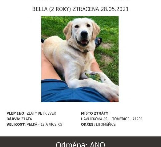 SOS, HLEDÁ SE  Bella je 2 roky stará fenka. Má h...