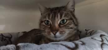 Může jít o obrázek kočka