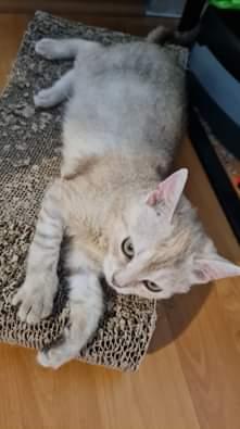 MINDUŠKA Štěstí se usmálo na kočičku Mindušku a ...