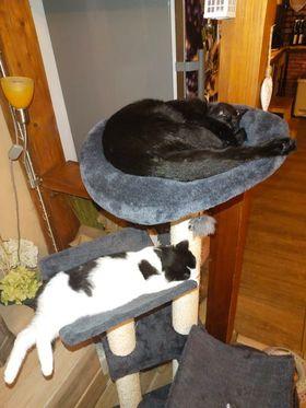 VODOVKA ( Viky) Pozdrav do Sluníčka posílá kočička...