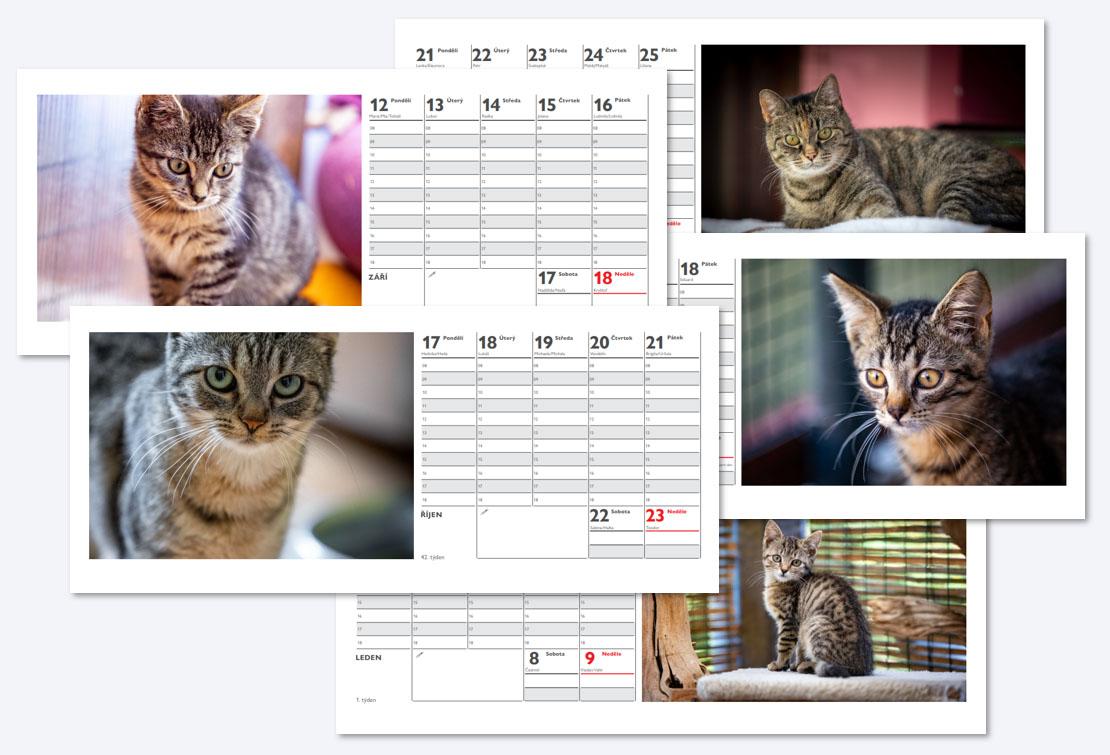 Kalednář kočičí dovom Sluníčko 2022
